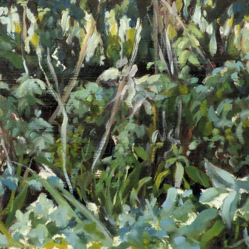 Nettle Hedgerow