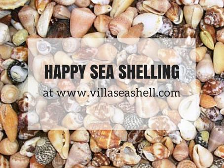 Seashells in Curacao