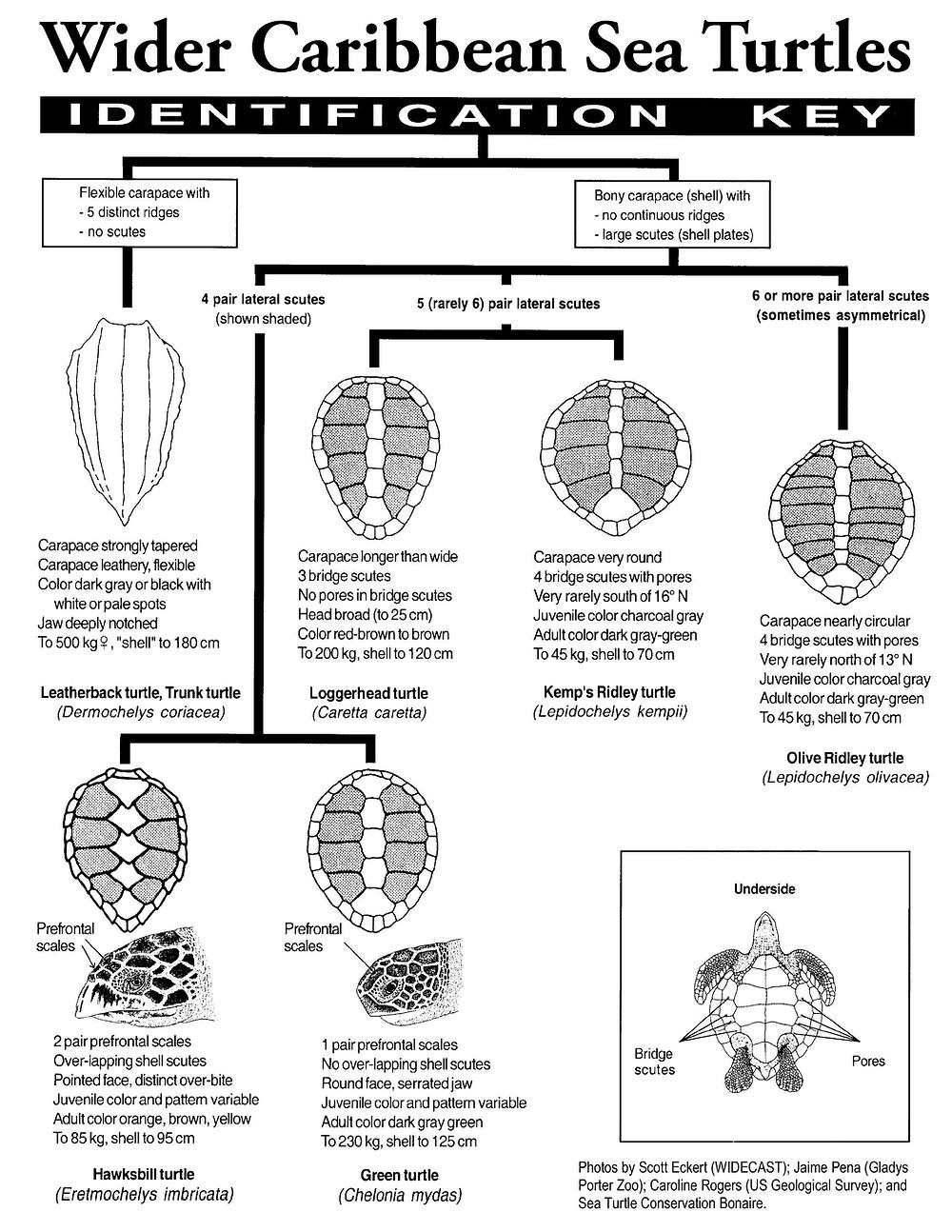 Sea Turtle Identification