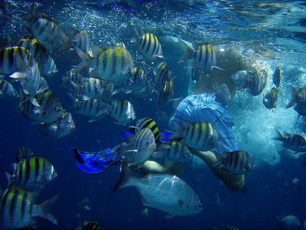 Curacao fish