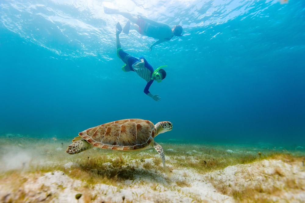 Sea Turtles, Curacao