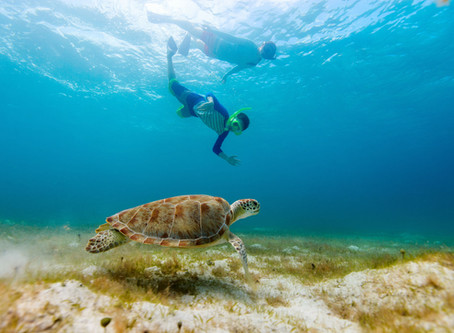 Swimming with Sea Turtles in Curacao