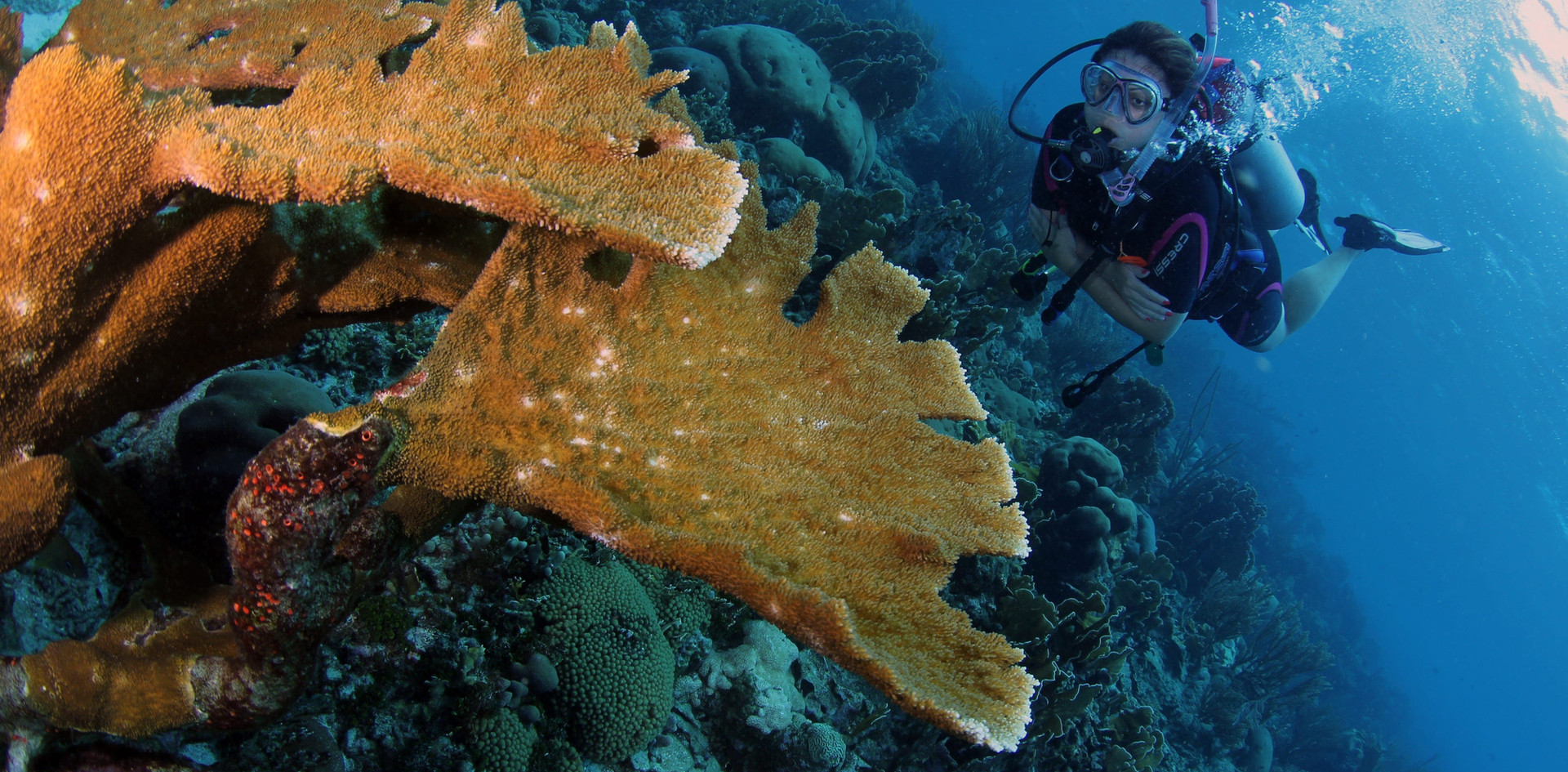 """Discover Curacao's beautiful underwater world with the local dive shop """"Coral Divers"""""""