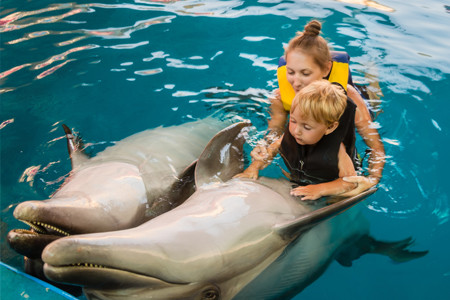 Swim with dolphins, fun for kids in Curacao