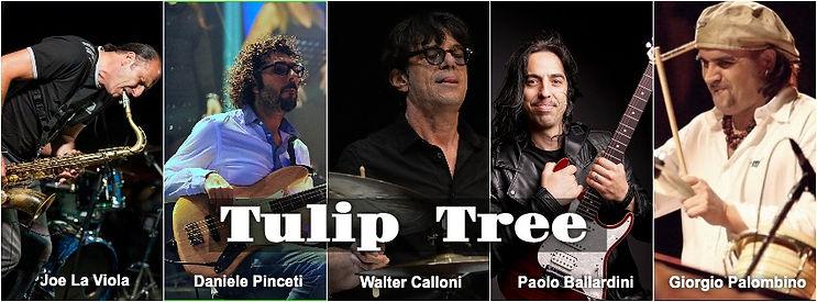 TULIP TREE.jpg