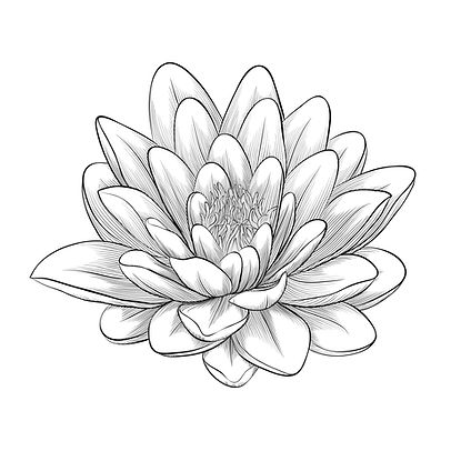 Water Lily Logo.jpg