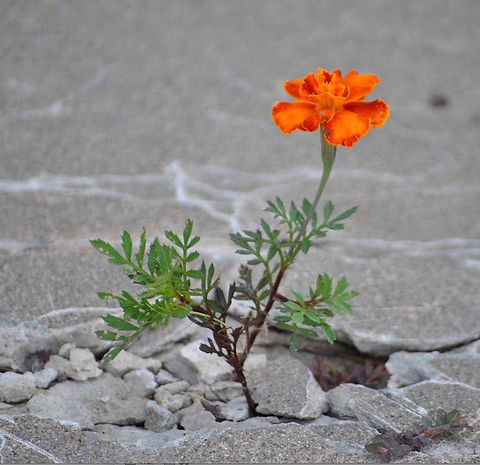 flower-out-of-concrete-4.jpg