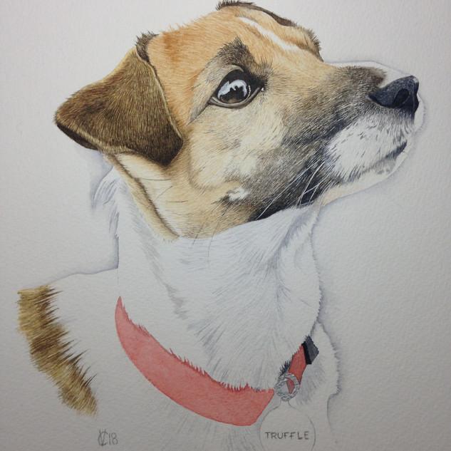 Truffle Portrait
