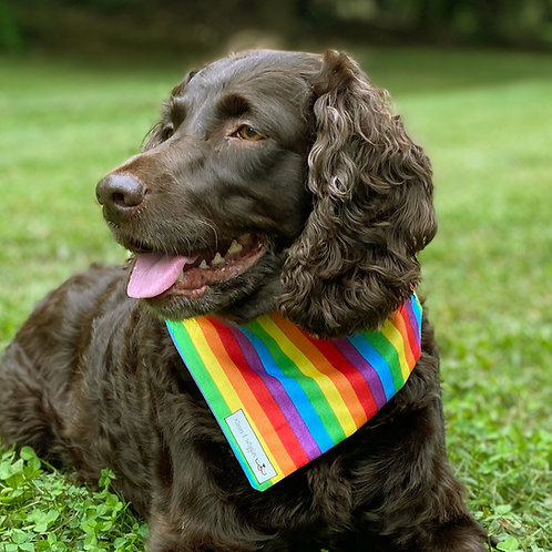 Rainbow Pride with Purple on Reverse Side
