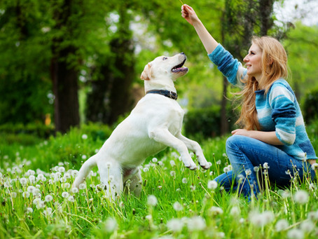 How to celebrate Earth Day with your pets