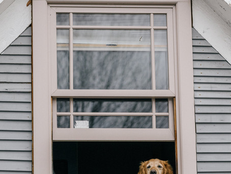 How to Prepare Your Dog to Be Left at Home Alone (Again)