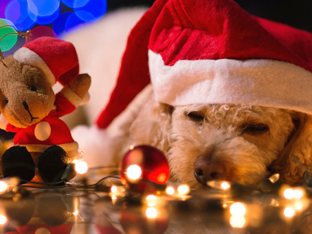 6 Helpful Christmas Safety Tips For Pet Owners