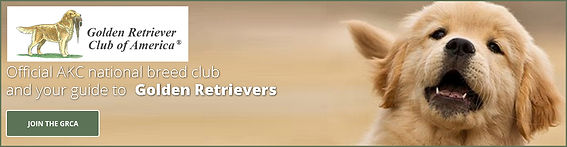 Golden Retriever Club of America