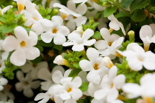 Flores para casamento -  - Quattro Fotografias - angelicas