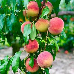 bennett-orchards-delaware-rheoboth.jpg