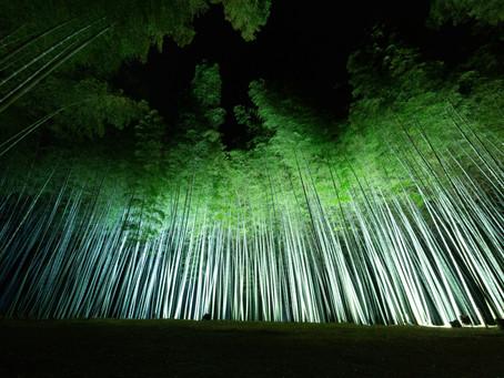 9月からの竹林ライトアップについて