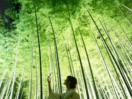 8月の竹林ライトアップ営業について |  Bamboo Summer Nights 2021