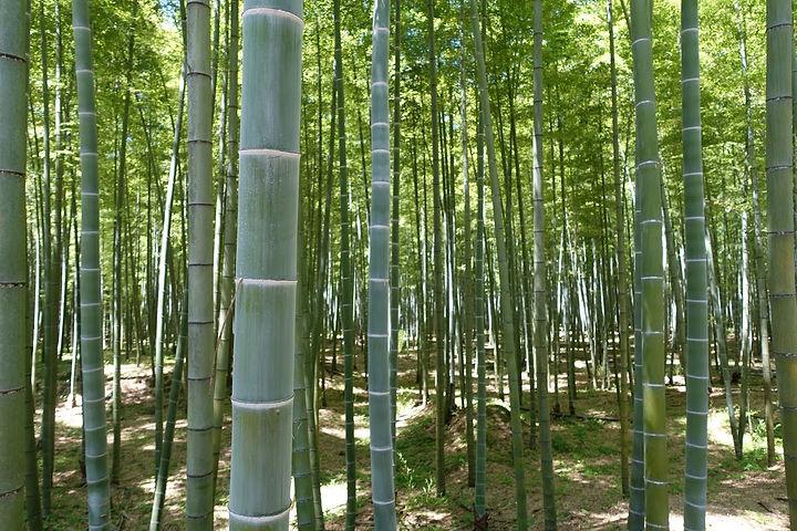 竹林2.JPG