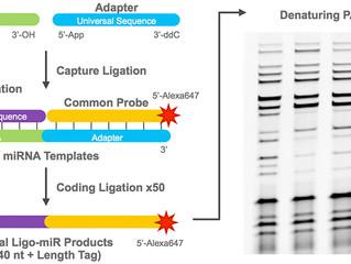 Journal Article Details the Use of Ligo-miR EZ for Quantifying miRNA Copy Number