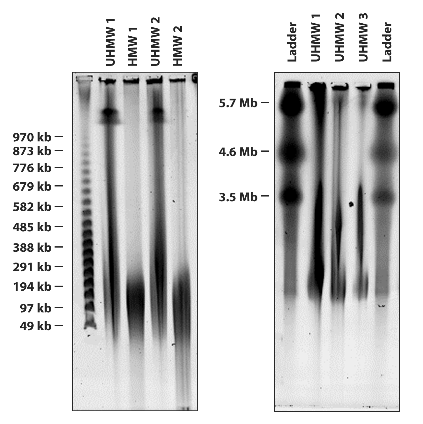 HMW DNA Extraction, Long-Read Sequencing