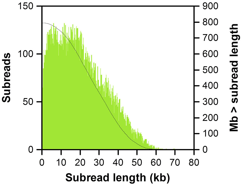 Nanobind High MW DNA for Long-Read Sequencing