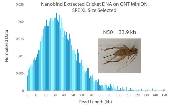 Nanobind Extracted Cricket on ONT MinION