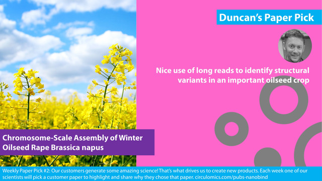 Chromosome-Scale Assembly of Winter Oilseed Rape Brassica napus