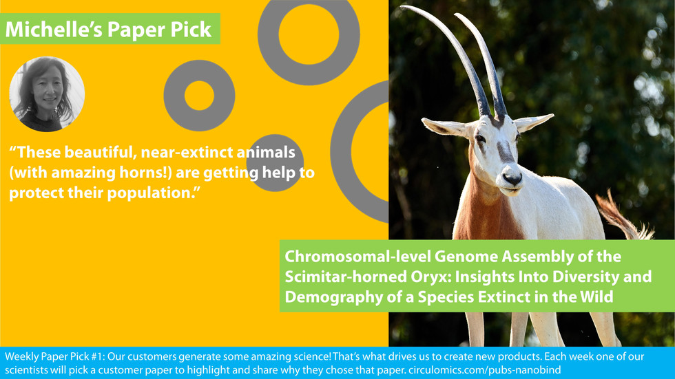Chromosomal‐level genome assembly of the scimitar‐horned oryx: Insights into diversity and demography of a species extinct in the wild