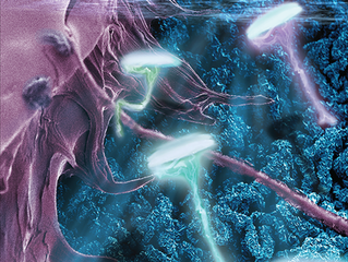Nanobind DNA Extraction Featured on Back Cover of Advanced Materials