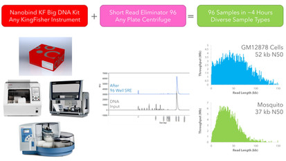High Throughput Nanobind Extraction and Size Selection