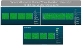 Human Blood Sequencing - Pore Occupancy