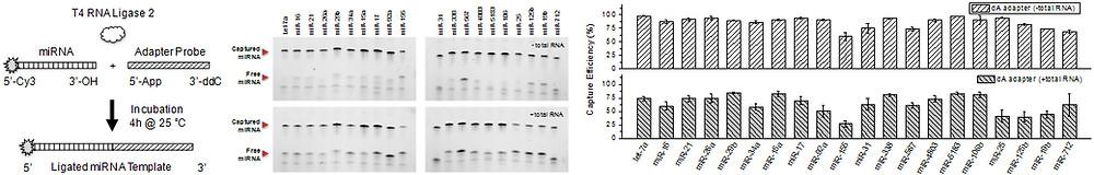 miRNA Adapter Ligation