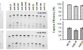 High Efficiency and Low Bias miRNA Ligation