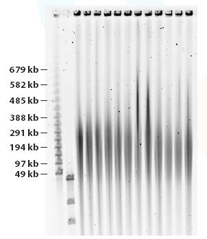 Circulomics - HMW DNA Extraction, Long-Read Sequencing