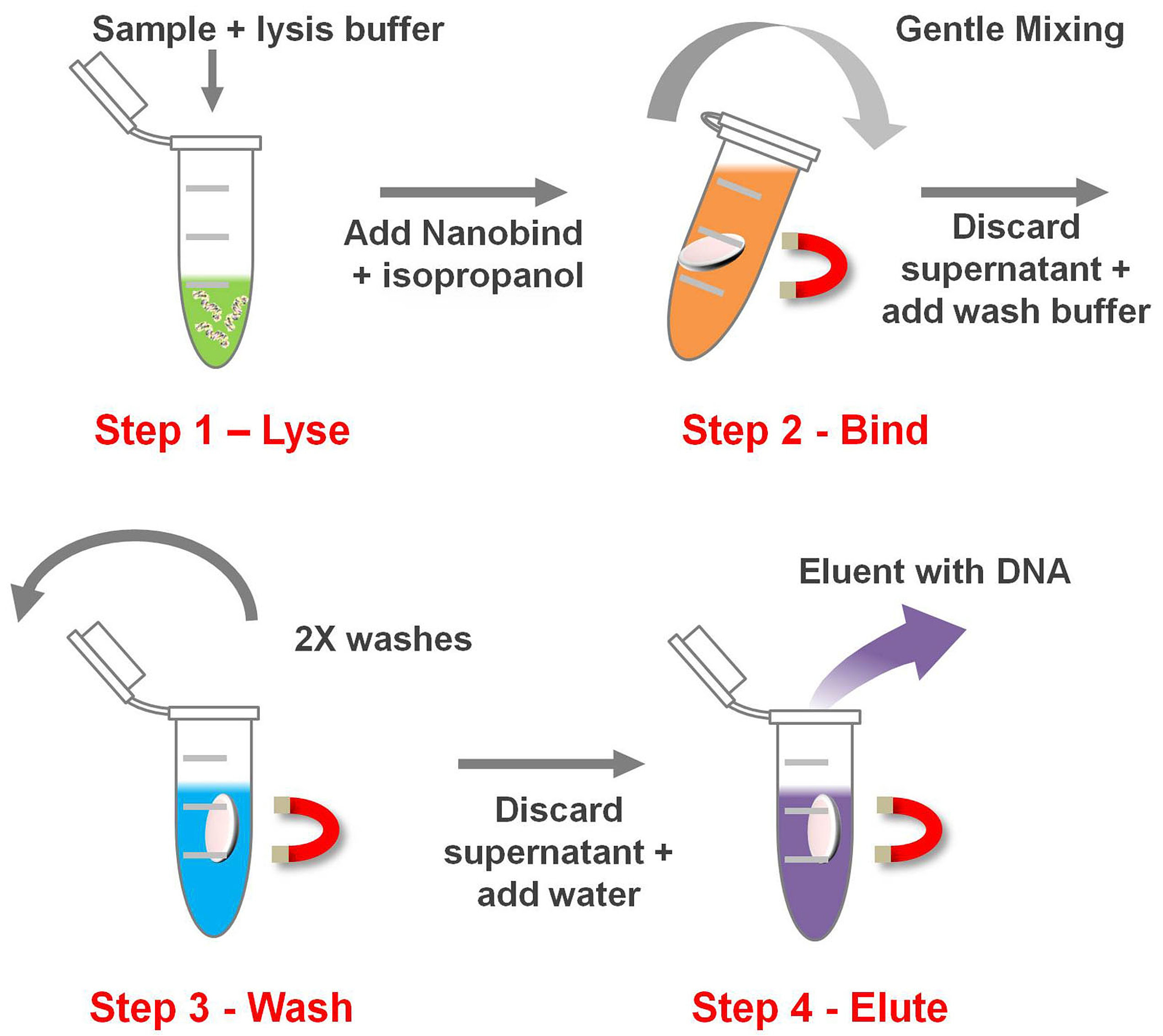 The Basics of DNA Extraction