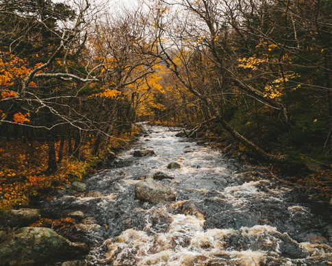 Corney Brook