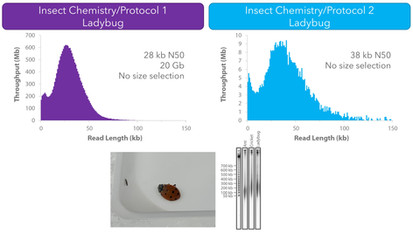 Nanobind Insect HMW DNA Extraction