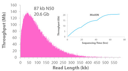 1 Day Nanobind Ultra Long Sequencing Workflow