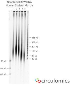 Nanobind Extracted Human Skeletal Muscle