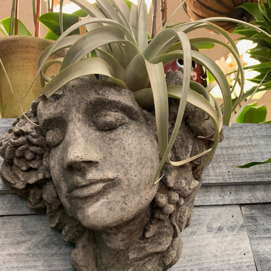 Cement Statue with Air Plant