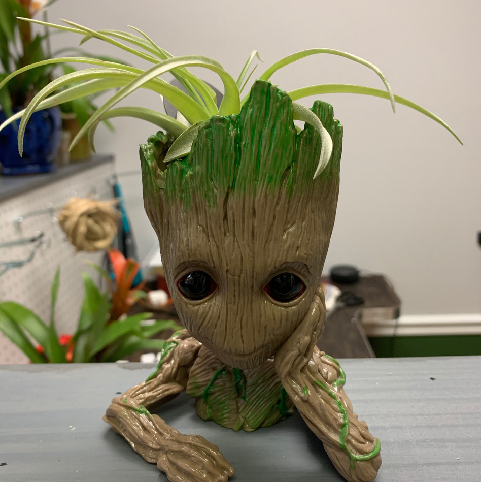 Groot with Air Plant