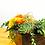 Thumbnail: Rosas, suculentas, leucospermum, cordifolium, maraca, vino