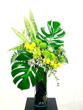 Eryngium, Monstera, lengua de suegra, bombi, Greentrick, col ornamental, dracena