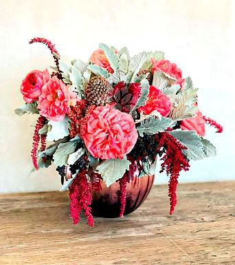 Rosa inglesa, amaranto, dusty miller