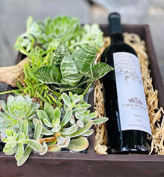 Box Suculentas con Botella de Vino
