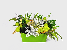 Bombi, col ornamental, duster miller, flor preservada
