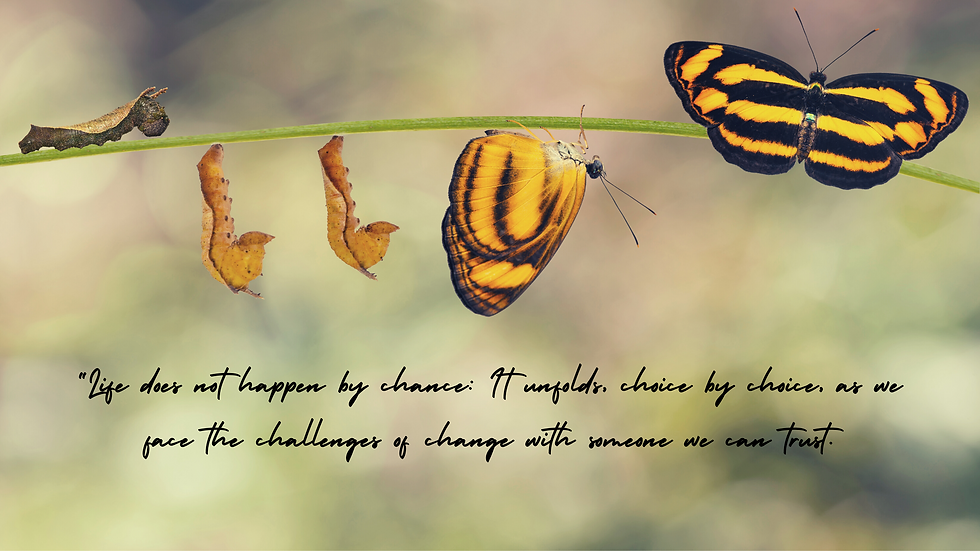 worm to chrysalis to butterfly