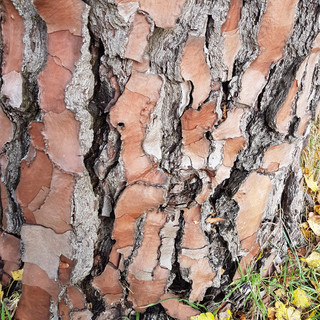 beautiful split bark