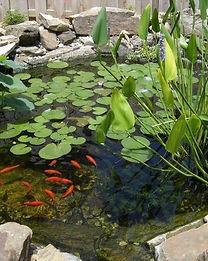 1-waterplants.jpg