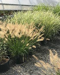 1-grasses.jpg